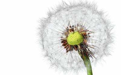 Certificare ECARF: uscatoarele noastre de rufe sunt ideale pentru persoanele care sufera de alergii